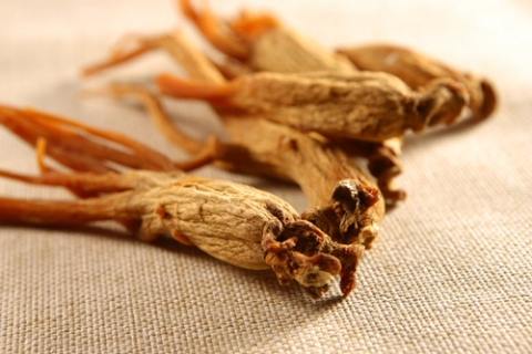 ginseng_fitologia