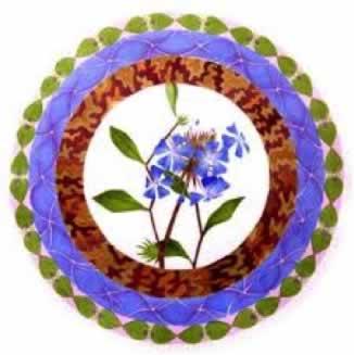 Flor de Bach Cerato Sumersalud 1